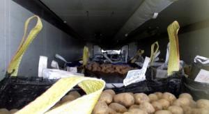 Przeładowane transporty z warzywami i pieczarkami
