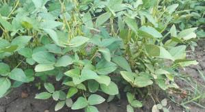 PIORiN: kontrole przestrzegania zakazu uprawy roślin GMO w 2019 r.