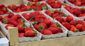 Na Ukrainie rozpoczął się sezon truskawkowy