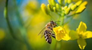 KZPRiRB przyłącza się do akcji na rzecz pszczół