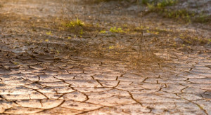 Szmulewicz: Suszą stale zagrożonych jest 45 proc. terenów rolnych (wideo)