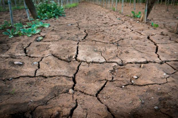 IUNG: Susza rolnicza występuje w całym kraju