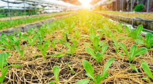 W dobie pandemii Singapur inwestuje w nowe technologie produkcji żywności