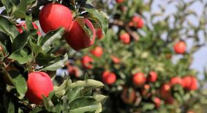 Rosja: mniejsze zbiory owoców z powodu mrozu