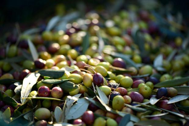 Pandemia koronawirusa pogłębia kryzys cenowy w sektorze oliwek