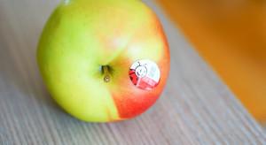 Jabłka Idared spod Brodnicy wzbogacą ofertę Biedronki