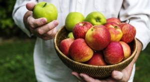 Badanie: W maju jabłka cieszyły się dużą popularnością