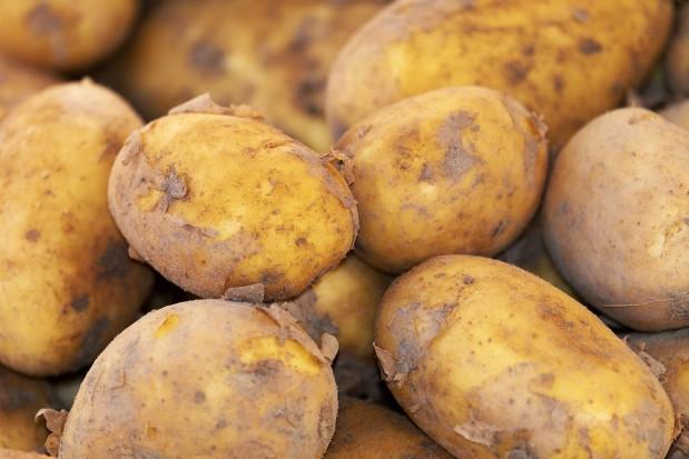 Handel młodym ziemniakiem na Giełdzie Rybitwy - OZPW chce interwencji PIORiN