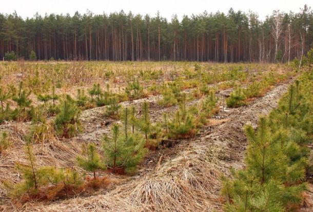 ARiMR: do 31 lipca nabór wniosków na zalesianie