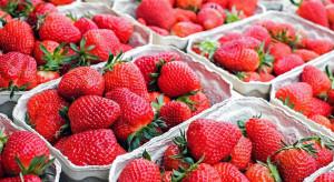 Jakie ceny truskawek na Giełdzie Goławin?