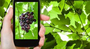 Lubuskie winnice online – nowa inicjatywa Lubuskiego Centrum Winiarstwa