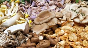 MZ umożliwi produkcję mieszanek suszonych grzybów z różnych gatunków