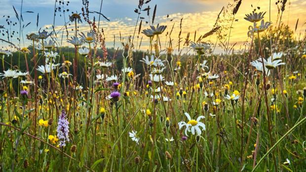 Raport: unijna polityka rolna nie zapobiegła spadkowi bioróżnorodności