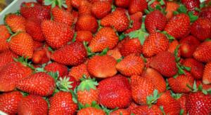 Ceny truskawek w maju wyższe niż przed rokiem