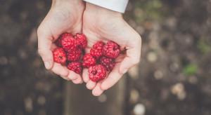 Na portalu Myzbieramy.pl gospodarstwa proponują chętnym zbiory owoców i warzyw