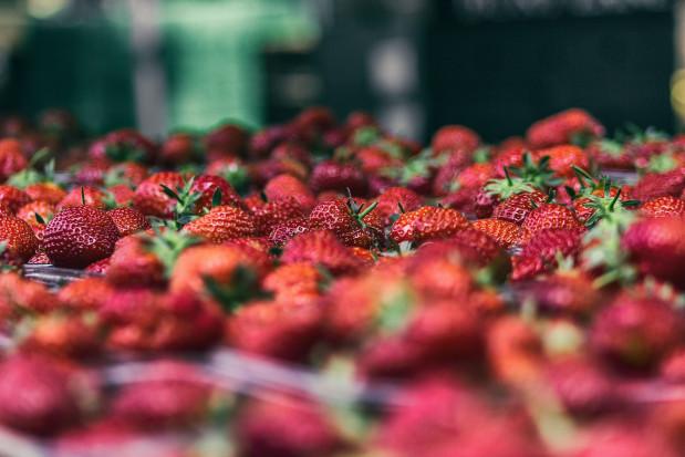 5 zł/kg za truskawkę eksportową w regionie grójeckim