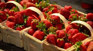 Truskawki 2020: Wzrasta podaż owoców na rynkach hurtowych, ceny spadają