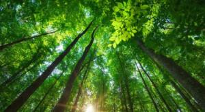 MFiPR:  240 mld euro to koszt wprowadzenia neutralności klimatycznej w Polsce