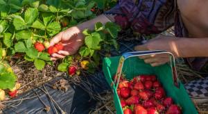 Kwarantanna głównym problemem ukraińskich migrantów zarobkowych w Polsce (badanie)