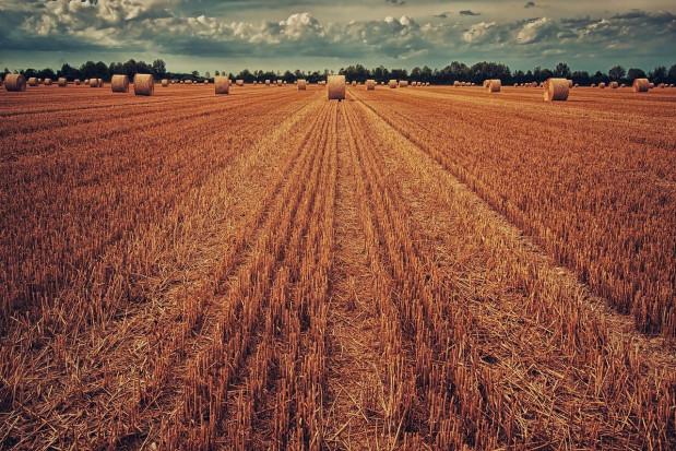 Unijna organizacja rolników COPA: za niski budżet rolny