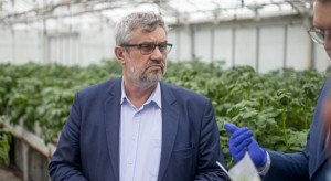 MRiRW: Odbudowujemy potęgę polskiego ziemniaka