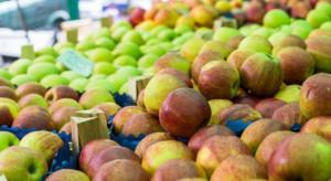 Unia Owocowa: Nowe strategie UE wpłyną na utratę konkurencyjności europejskiego sadownictwa