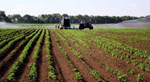 Rozmowy o priorytetach w rolnictwie z okazji przewodnictwa Niemiec w Radzie UE