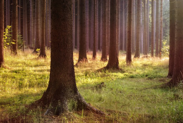 Naukowcy: chrońmy lasy, wspierając ich otoczenie i naturalne procesy regeneracji
