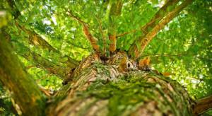 Ekstremalne zjawiska pogodowe powodują zmiany w lasach