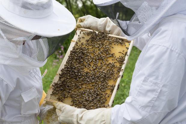 Ardanowski: w nowym unijnym budżecie rolnym ponad 42 mln zł rocznie trafi do pszczelarzy