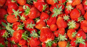 Jakie ceny truskawek na rynkach hurtowych w końcówce czerwca?