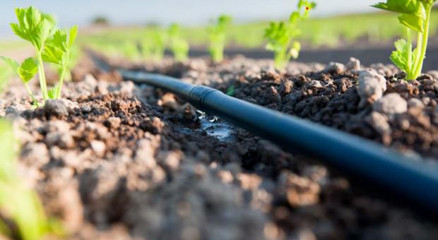 Jaki system wybrać do nawadniania upraw ogrodniczych?