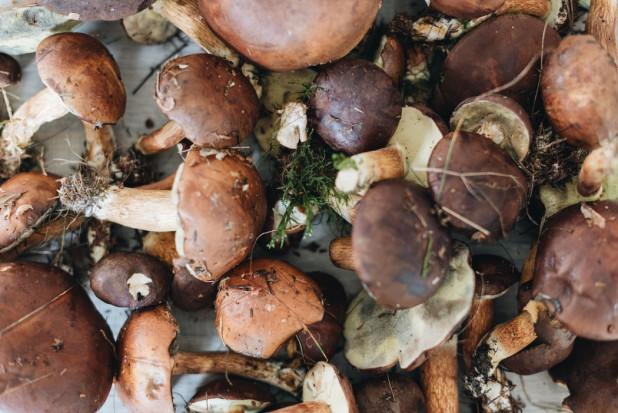 W lasach Warmii i Mazur pojawiły się grzyby