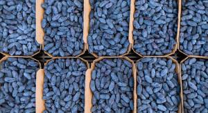 Jagody kamczackie: Słabe perspektywy eksportu, ale rośnie popyt w kraju