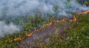 Rosja: Ogień zniszczył już ponad 300 tys. hektarów lasu