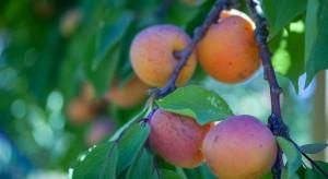 Futurolog: nie wszystkie owoce i warzywa będzie można nadal uprawiać w Polsce