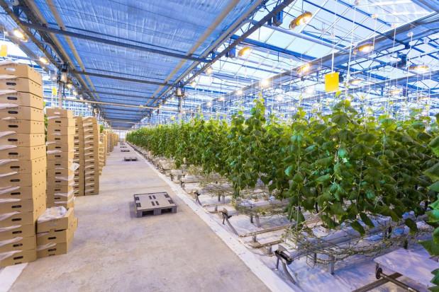 Bayer i Prospera opracują rozwiązania cyfrowe dla producentów warzyw szklarniowych