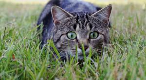 Już 6 tys. lat temu koty wspierały rolników w walce z gryzoniami