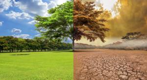 Globalne ocieplenie wpływa na ewolucję drzew