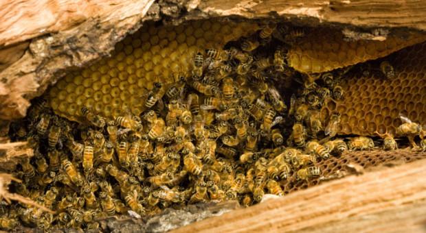 Mieszkaniec gminy Dźwierzuty wytruł pszczoły sąsiadowi