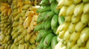 Bananowy Covid niszczy plantacje