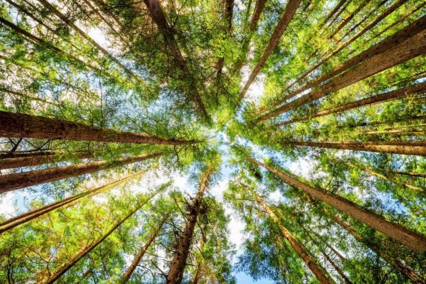 Przez dekadę powierzchnia lasów w Polsce wzrosła do 9,26 mln ha