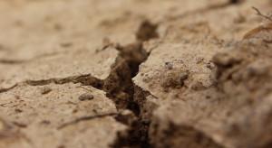 Nawalne deszcze a susza – czy uprawom w dalszym ciągu zagraża brak wody?