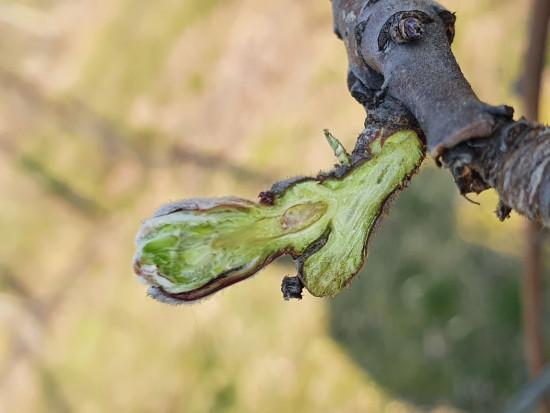 Sezon ochrony sadów 2020 – czym zaskakuje sadowników?