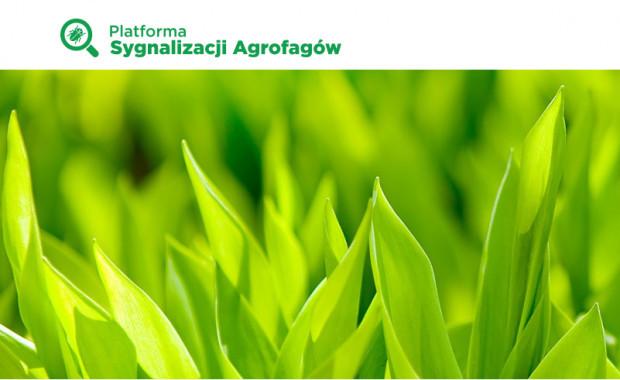Platforma Sygnalizacji Agrofagów – pomocne narzędzie w określaniu potencjalnych zagrożeń