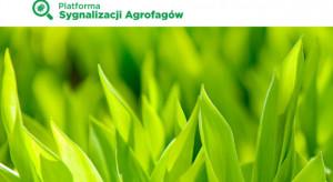 Platforma Sygnalizacji Agrofagów – pomocna w określaniu zagrożeń