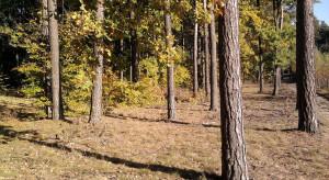IBL: zwiększone zagrożenie pożarowe w lasach w kilku miejscach w kraju