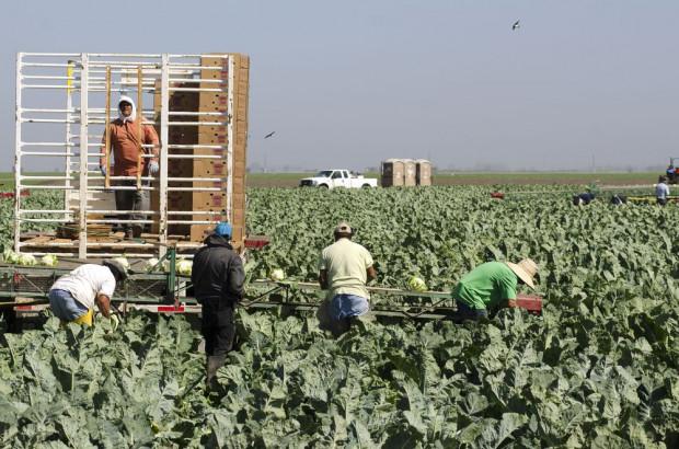 174 pracowników sezonowych ma koronawirusa w gospodarstwie w Bawarii