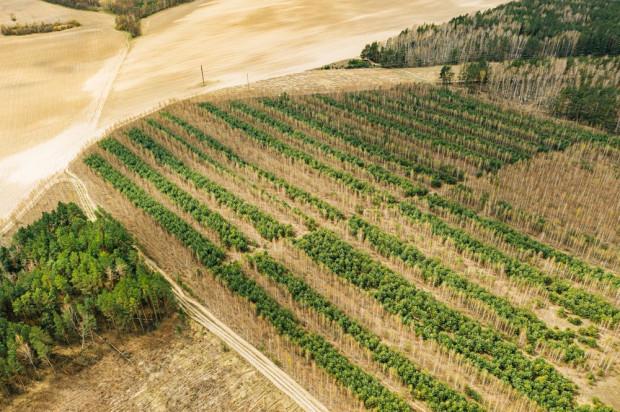 Wsparcie na zalesianie – nabór wniosków dobiega końca