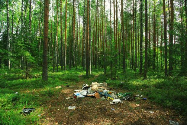 Będą wyższe kary za śmiecenie w lesie